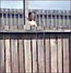 1260007290 nv jpg Bóng ma xuất hiện bí ẩn bên bờ tường rào