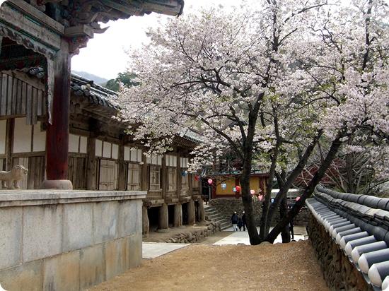 Korea-Hwaeomsa_76.jpg